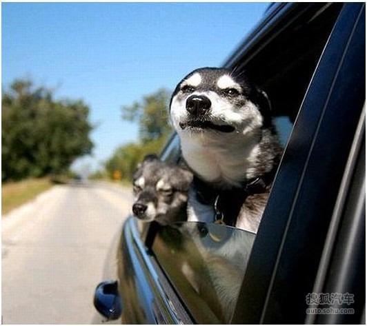 大全 汽车图片库 事件图 其他图片 2014年图片 车窗外的世界 可爱萌宠