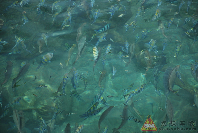壁纸 海底 海底世界 海洋馆 水族馆 780_524