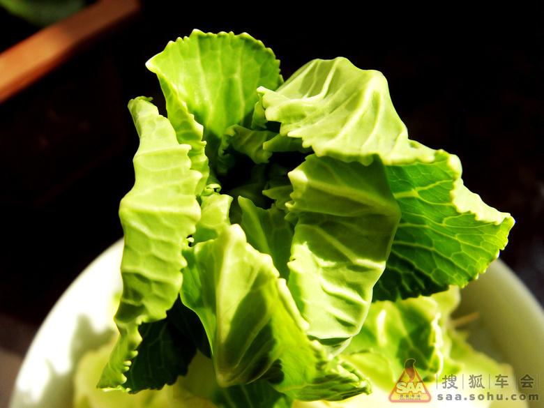 圆白菜的成长历程