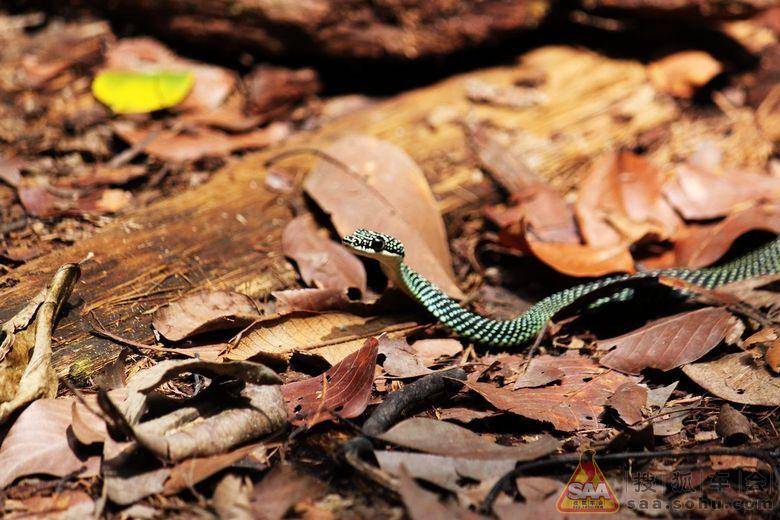 新加坡的自然保护地区----武吉知马山