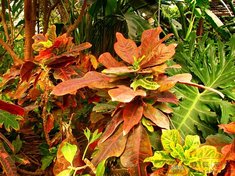 热带雨林里的植物简介_热带雨林的动物和植物