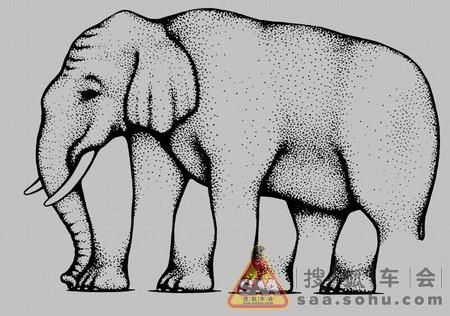 壁纸 大象 动物 450_316