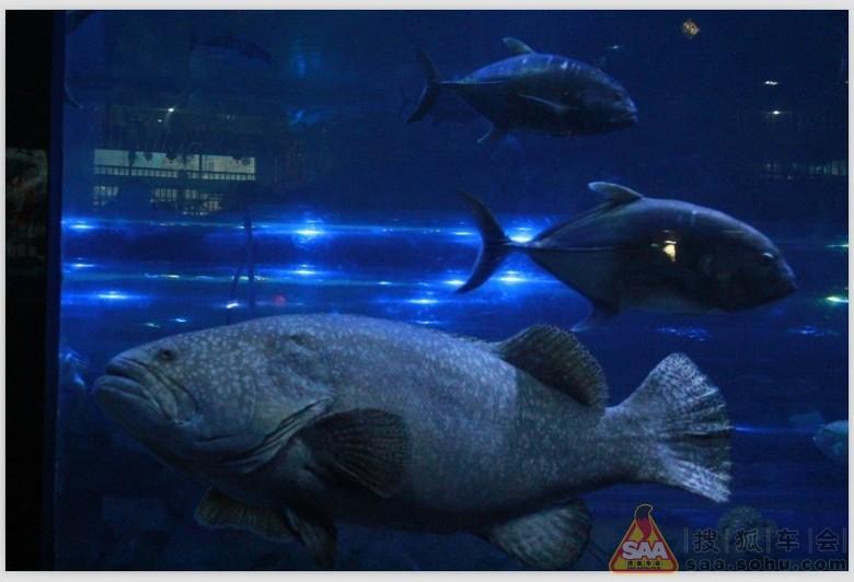 在秦岭野生动物园有个所谓的海洋馆