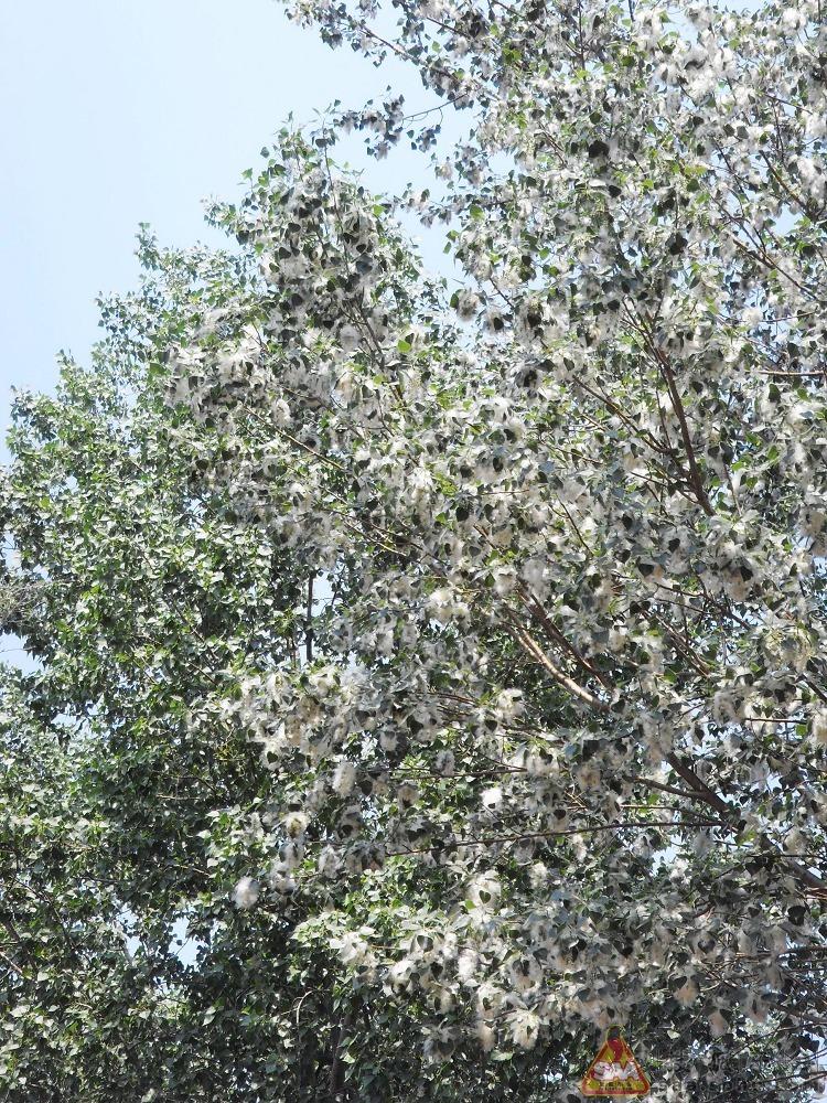 壁纸 花 树 桌面 750_1000 竖版 竖屏 手机