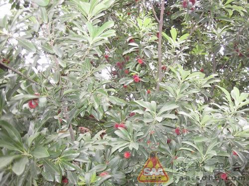 二十二 西瓜(还记得夏天偷跑到人家西瓜地里砸开就吃的日子吗?)