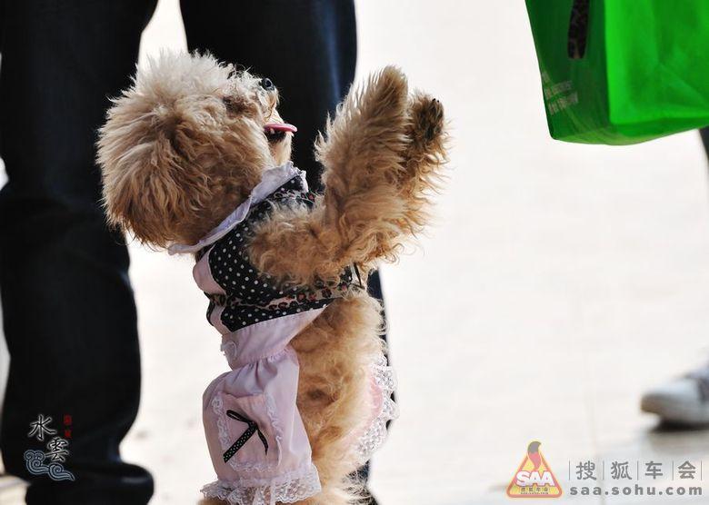 【新春第一聚】广州美食自驾游南沙车友FB团美食生物语梦图片